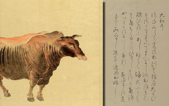 鎌倉時代からの銘牛・大和牛(や...